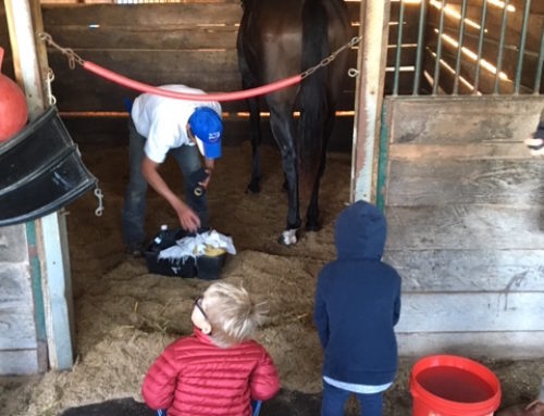 Why Own a Racehorse? It's a Family Thing…It's a Personal Thing…It's a Real Thing
