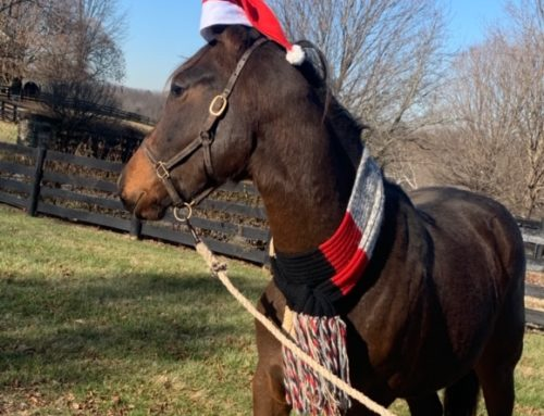 Why Own a Racehorse? Because It's Truly The Best Christmas Miracle & Present Ever