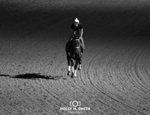 Horse of the Day — Forever Unbridled: Through the Eyes & Lens of Holly M. Smith