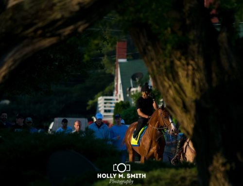 """The Pressbox's"" Horse of the Day — Justify: Through the Eyes & Lens of Holly M. Smith"