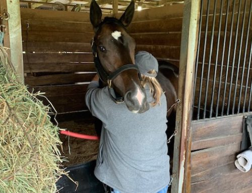 Why I Own a Racehorse? Sometimes Even I Wonder If The Thrills Can Overcome the Chills