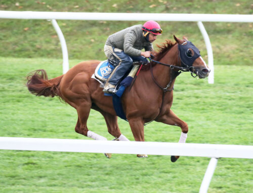 A Look at Some Breeders' Cup Hopefuls: Through the Eyes & Lens of Coady Photography