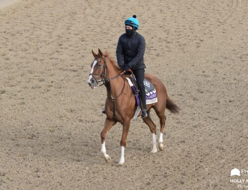 Breeders' Cup Views from Churchill Downs: Through the Eyes & Lens of Our Very Own Holly M. Smith