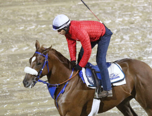 Breeders' Cup Works at Famed Churchill Downs: Splish, Splash Through the Eyes & Lens of Coady Photography