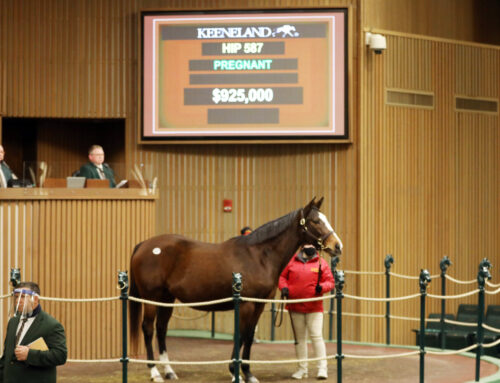 Pompa's Dispersal & Sam-Son Broodmares Spark Action at Keeneland's January Horses of All Ages Sale