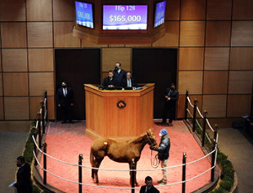 Speightstown Colt Tops 1st Session of Fasig-Tipton's Winter Mixed Sale