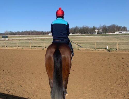 Why I Own a Racehorse? What Better Way to Spend a Crisp Spring Morning That Watching Her Train