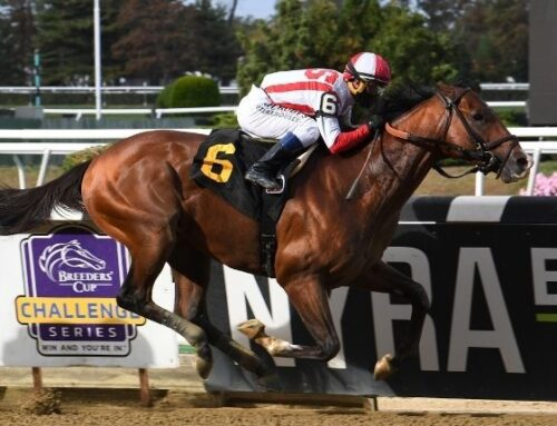 G3 Gotham Preview: Highly Motivated Could Earn KY Derby Points on Saturday