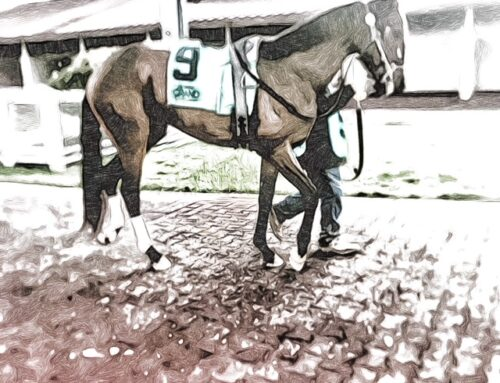 Why I Own a Racehorse? Because There Is Nothing Like Race Day…Nothing…Nada…Zero
