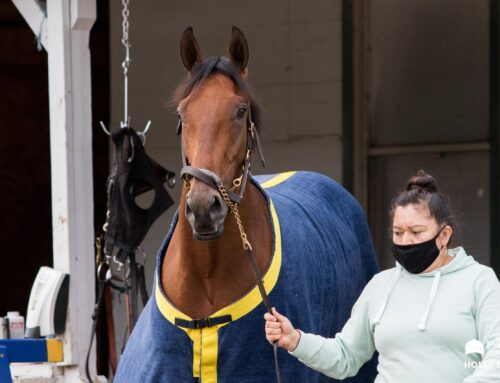 G2 Black-Eyed Susan Kick Starts Pimlico's Preakness Weekend on Friday