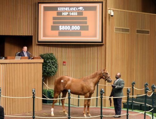 Keeneland September Yearling Sale Update: Curlin Filly Tops Session