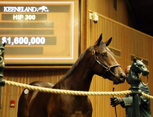 Keeneland September Yearling Sales Update: Quality Road Colt Is Session Topper