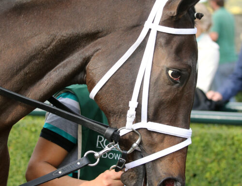 Photos, Notes & Quotes From the G3 Rood & Riddle Dowager Stakes: Summer in Saratoga